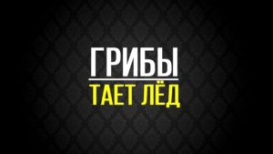 Текст песни Тает лед Грибы