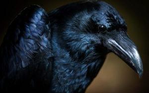 Текст песни Черный ворон